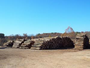 4) Timber CP5373